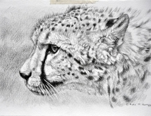 cheetah_pencil_sketch