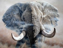 out_of_africa_elephant