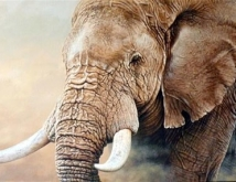 out_of_africa_elephant2