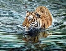 tiger_in_river_sold